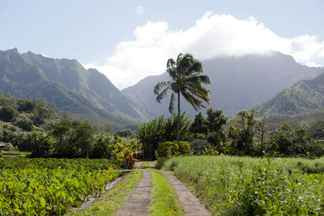 Hawaiian field